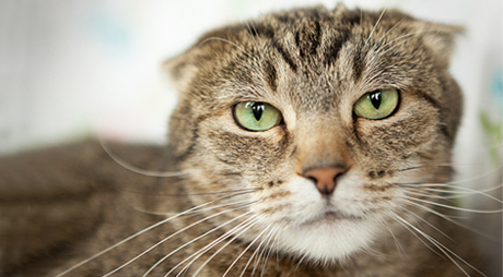 5 Things That Are Stressing Out Your Kitty