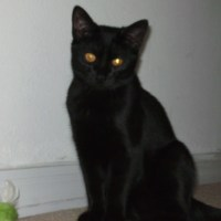 Cats' sixth sense: camera detection.