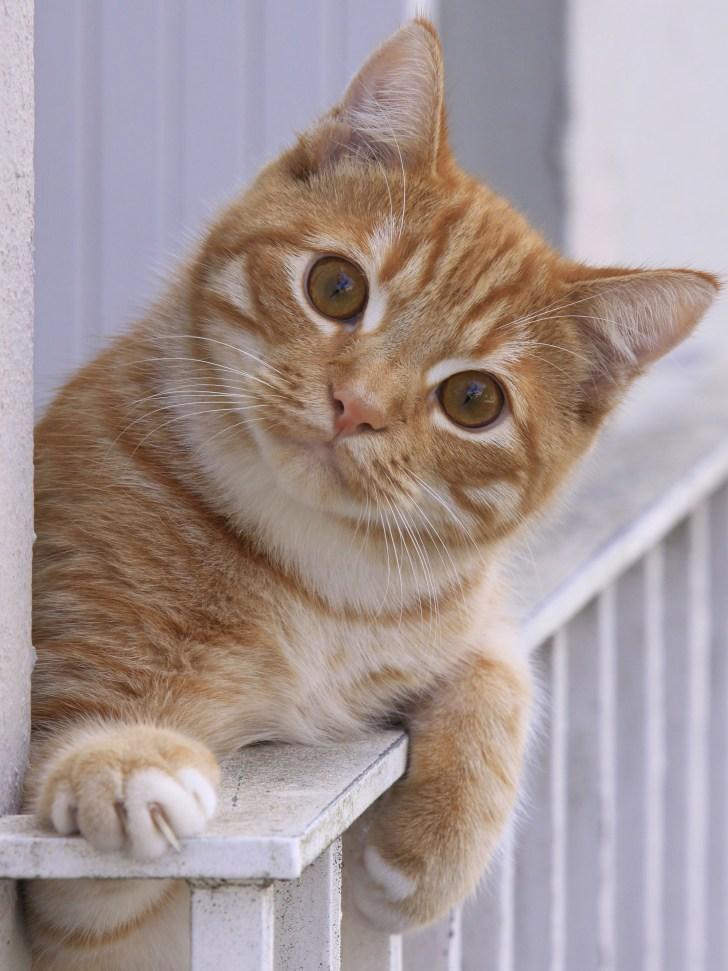 Chat au balcon