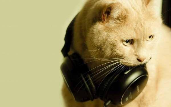 унылый котик, слушающий треклист