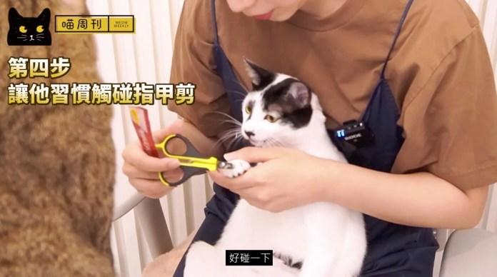 6 | 喵周刊 Meow Weekly