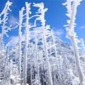 急変の山~雪の天狗岳その2