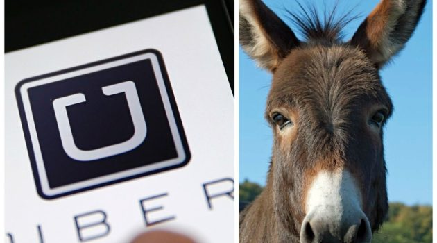 Uber Mula