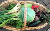 canasto verduras