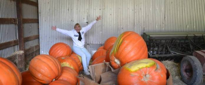 Hopewell Valley Arts Council Mounts Exhibition of Giant Carved Pumpkins For One Weekend Only