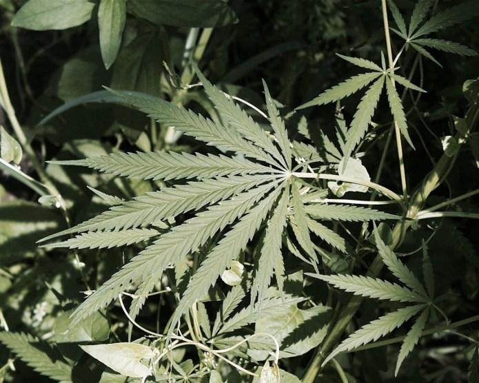 Narcotics Arrest in Lawrenceville