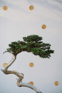 Bonsai Geometry by Andrew Wilkinson