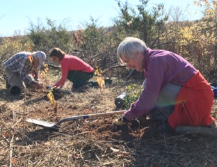 Volunteers planted 500 native flowers, grasses, shrubs and trees in Hopewell Borough Park in conjunction with the American Woodcock Habitat Restoration Project - sponsored by the Sourland Conservancy, Mercer County Park Commission and Friends of Hopewell Valley Open Space - photo by Laurie Cleveland
