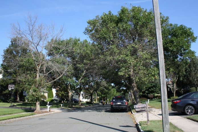 Removal of Emerald Ash Trees Begins in Lawrence Township