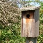 Chris Berry's birdhouse