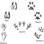 Animal Tracks few images