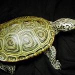 turtletalkfacebookpic