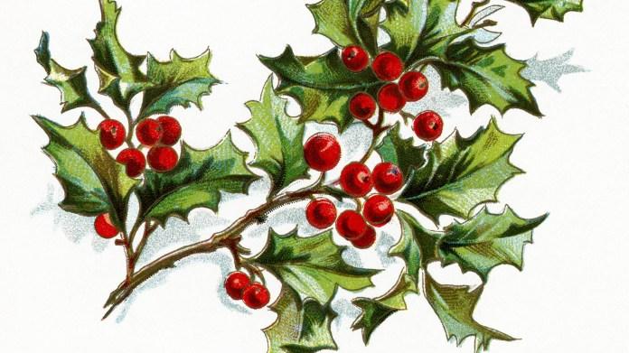 The Gift of Art: Robin Jess Botanical Illustration Workshop
