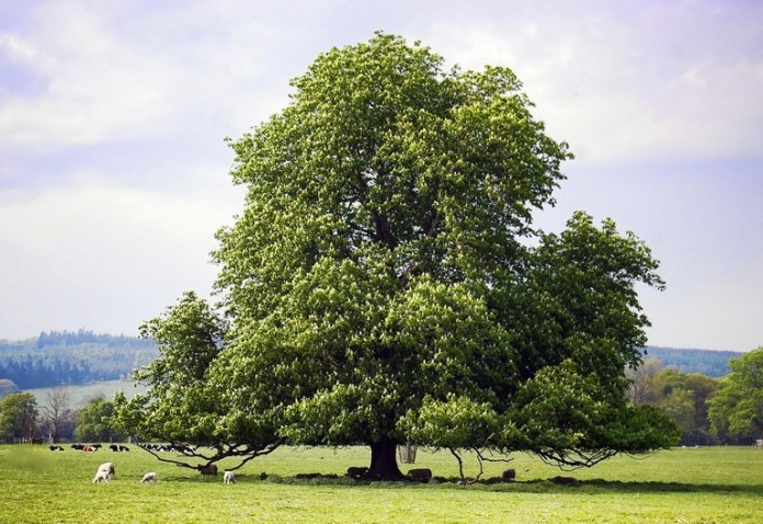 Local scientist to speak at PA Farm show Monday on the plight of American Chestnuts