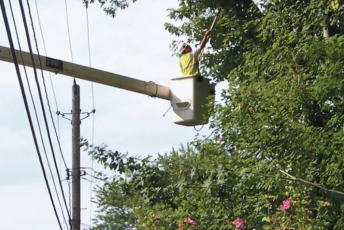 From the Towns:  JCP&L will be tree trimming in the township soon