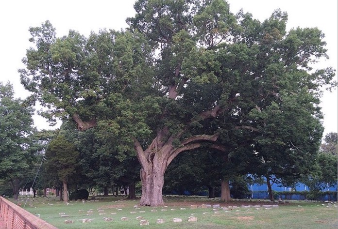 From the Towns: Hopewell Township, a Tree City USA, Welcomes Historic Salem Oak Seedling
