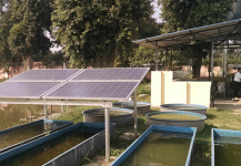 Rajasthan Proposes Purchase of Excess Power Generated by Solar Pumps at ₹3.44_kWh