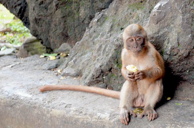 mercredie-blog-mode-voyage-thailande-singe-flippant