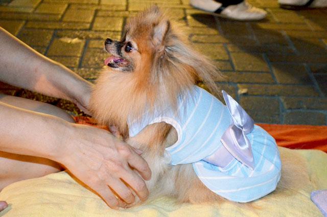 mercredie-blog-mode-voyage-thailande-vetements-chien