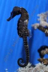 2012. Seahorse