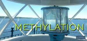 methylation-pic-2