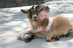 goat hugged by girl