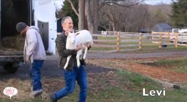 Jon Stewart and rescued goat