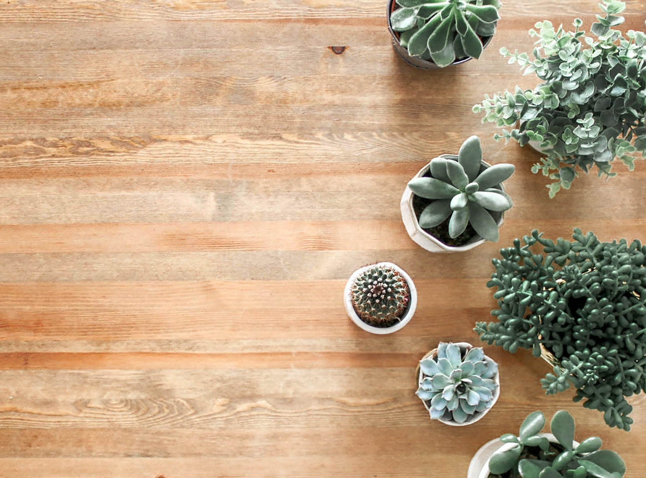 Easy Ways to Add Greenery to Your Home