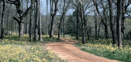 ranch path 2
