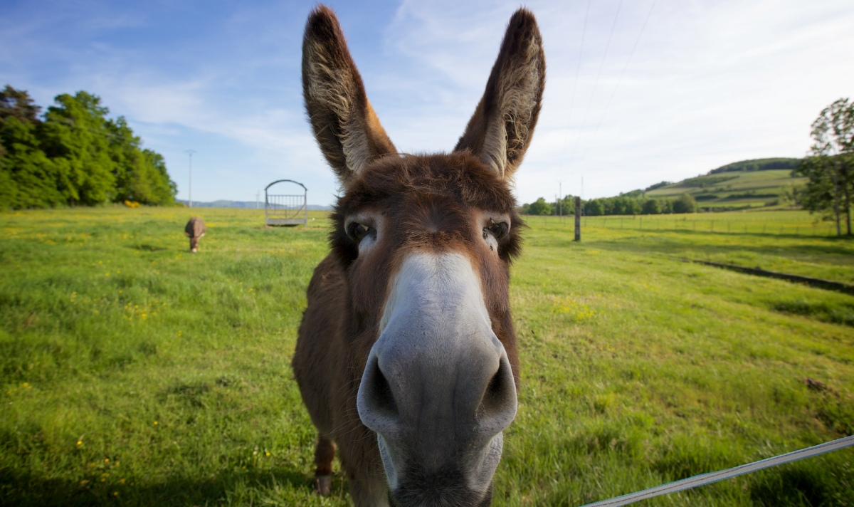 donkey_ears_most_powerful_thing_you_can_do_today_to_discover_your_calling_new