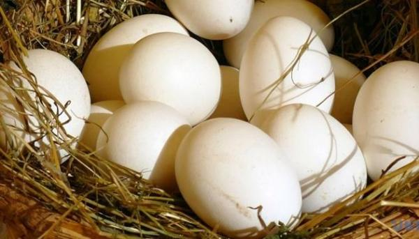 Ethiopia to import edible eggs from Ukraine
