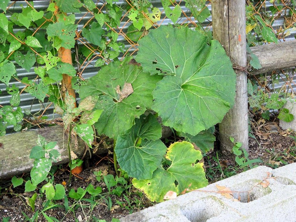 今年植えた野菜類
