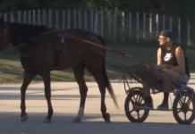 nikola jokić-hipodrom-konji-reprezentacija