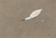 Egret in the Tideline, Limited Edition print from original egg tempera painting.