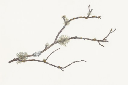 Twig with Lichens