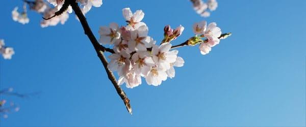 Primavera - Elemento madera
