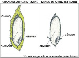 Grano integral de arroz. Imagen: lafuerzanatural.wordpress.com