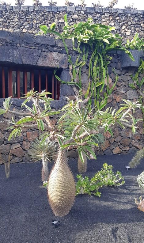 lanzarote-_-jardin-de-cactus_20.jpeg