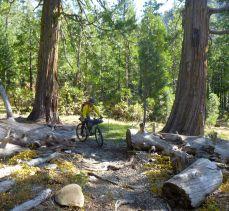Lavezolla Creek Trail cedars