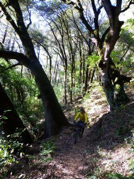 The South Yuba Trail oaks
