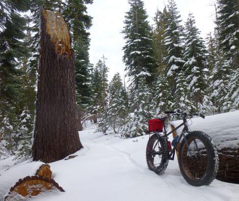 EFat-LittleBald_Trail