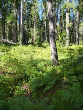 Greenery on Spaulding Lake trail