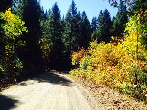 Finning Mill road in Foresthill. This is the best fall colors I've found in this area. Tahoe has some aspens but not here.