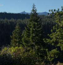 Castle Peak view
