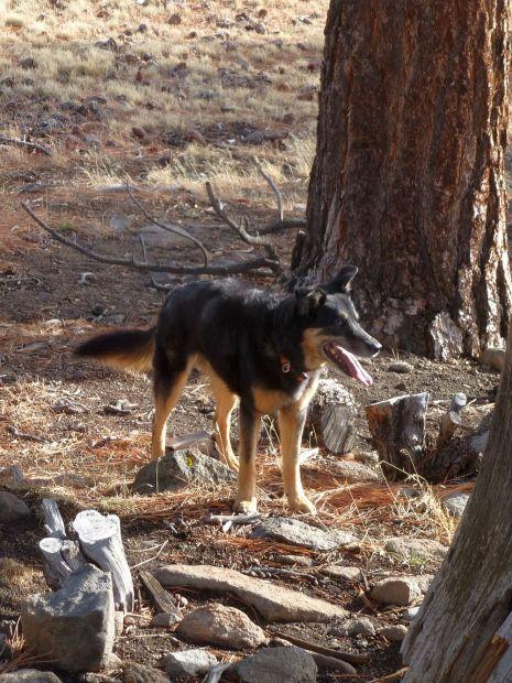 The trail dog