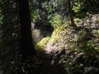 A-tree-trail