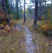 Graeagle Creek Trail