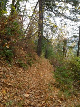 WS trail with a bed of oak leaves much of the way down to Eldorado Creek