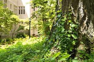 university-campus-tree-growth-royalty-free-thumbnail