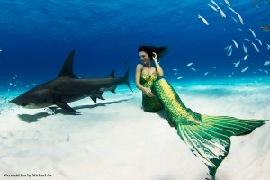 Mermaid Kat and hammerhead shark